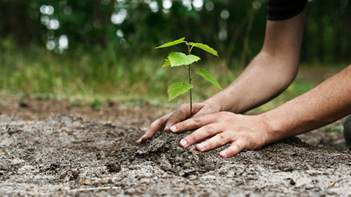 planting a tree, carbon neutral